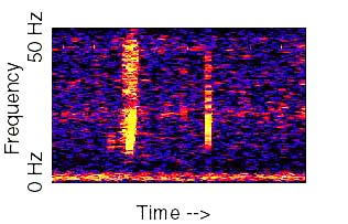The Spectrogram of the Bloop