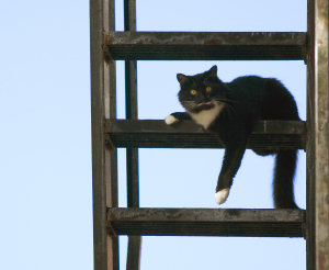 HighRise Syndrome Damn Interesting - 35 cats pulling ridiculous faces imaginable